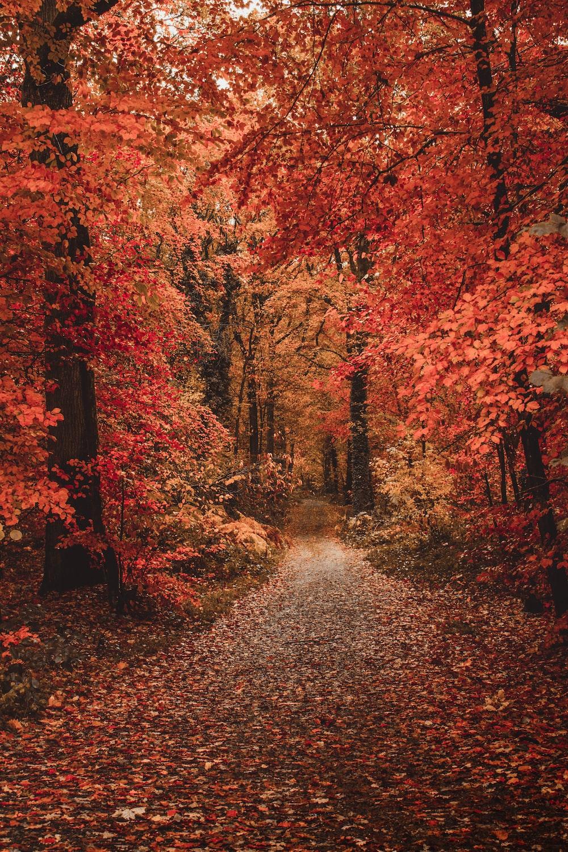orange flowering trees showing pathway