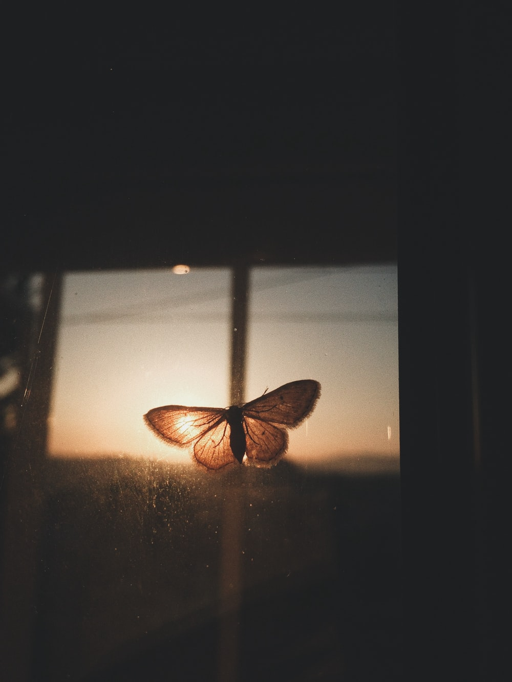 butterfly on clear glass sheet in selective focus photography