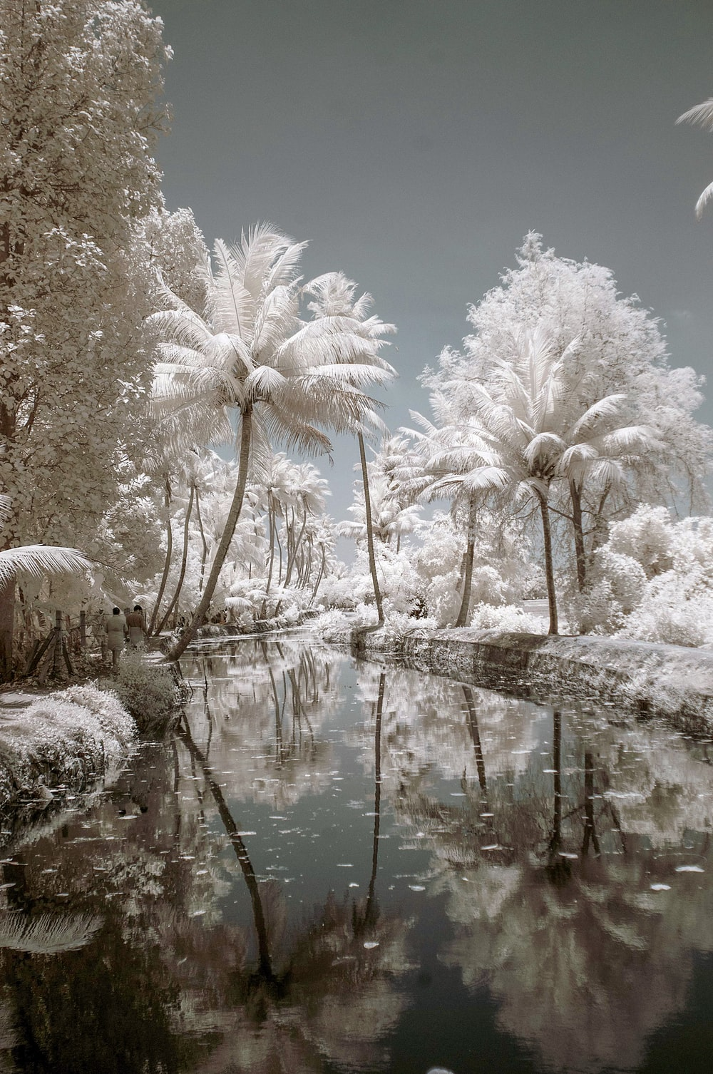 white trees near river painting