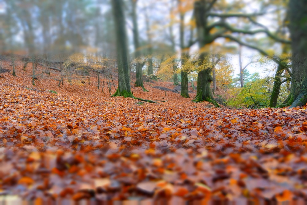 dried leaves in forest
