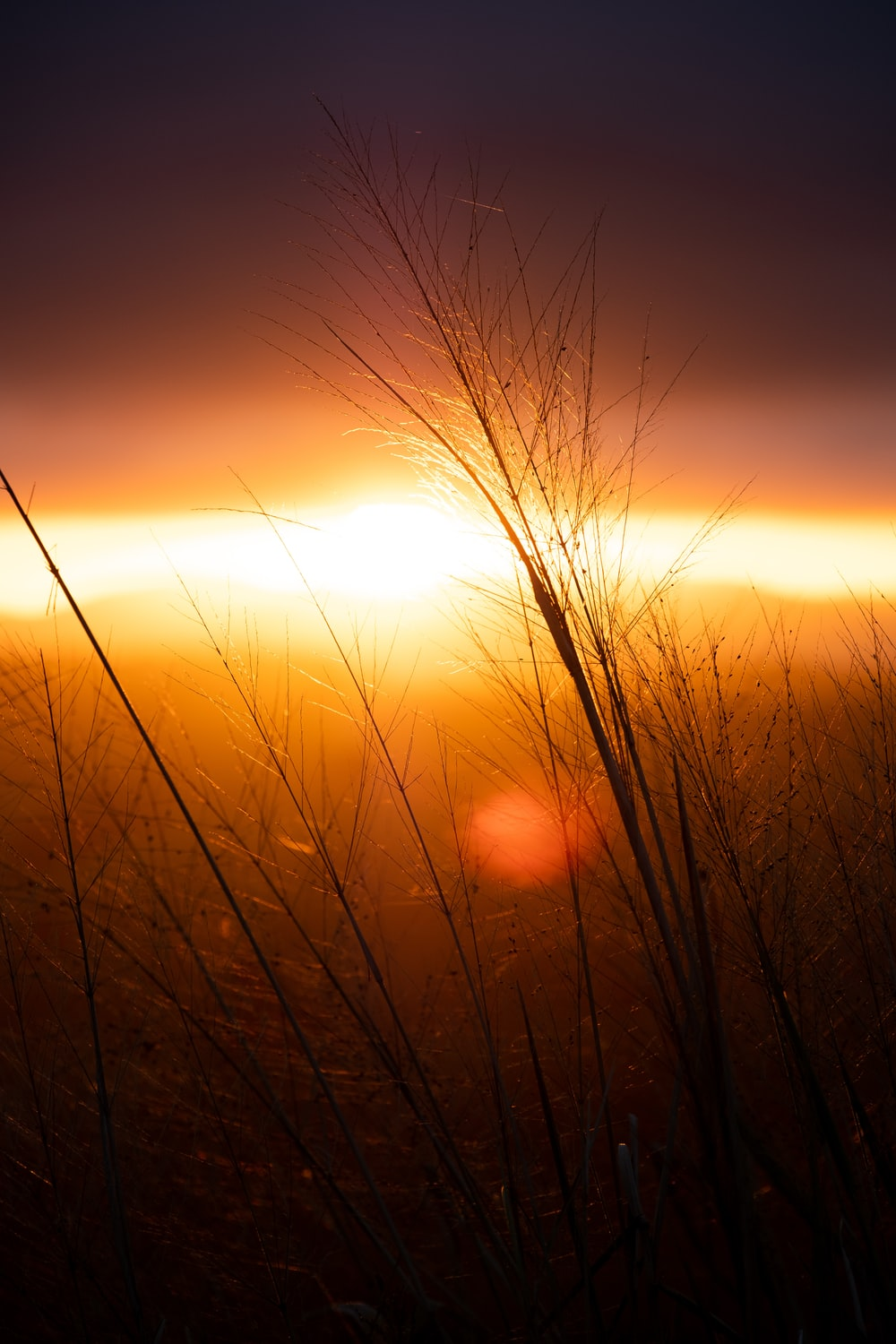 silhouette of grain field during sunset
