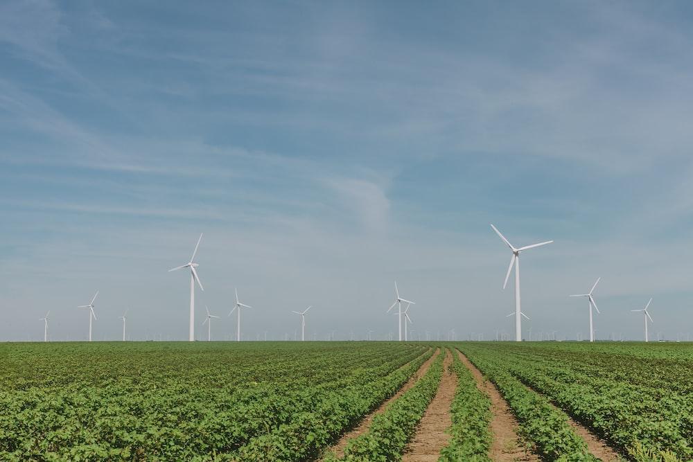 white wind mills in green open field