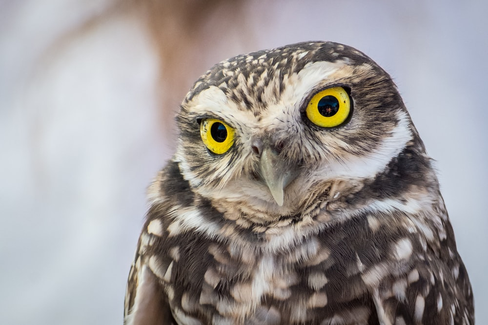 selective focus photography of owl with yellow eyes