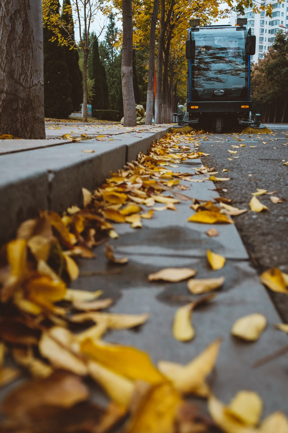 selective focus photography of leaves on sidewalk