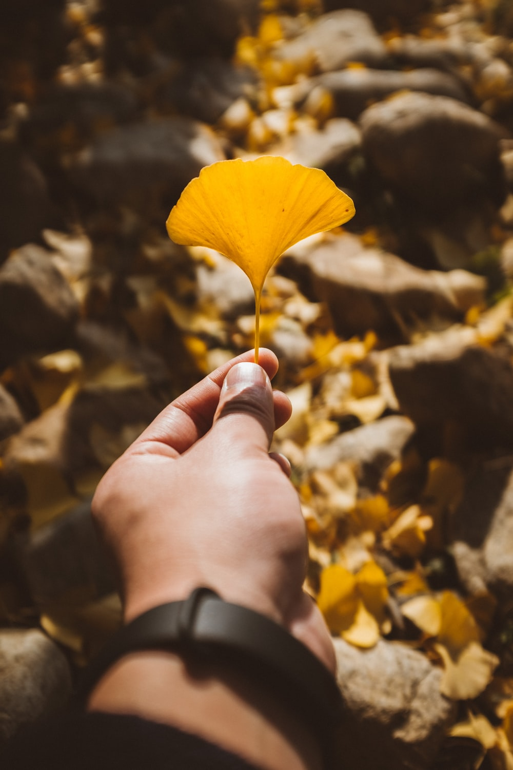 person holds yellow leaf