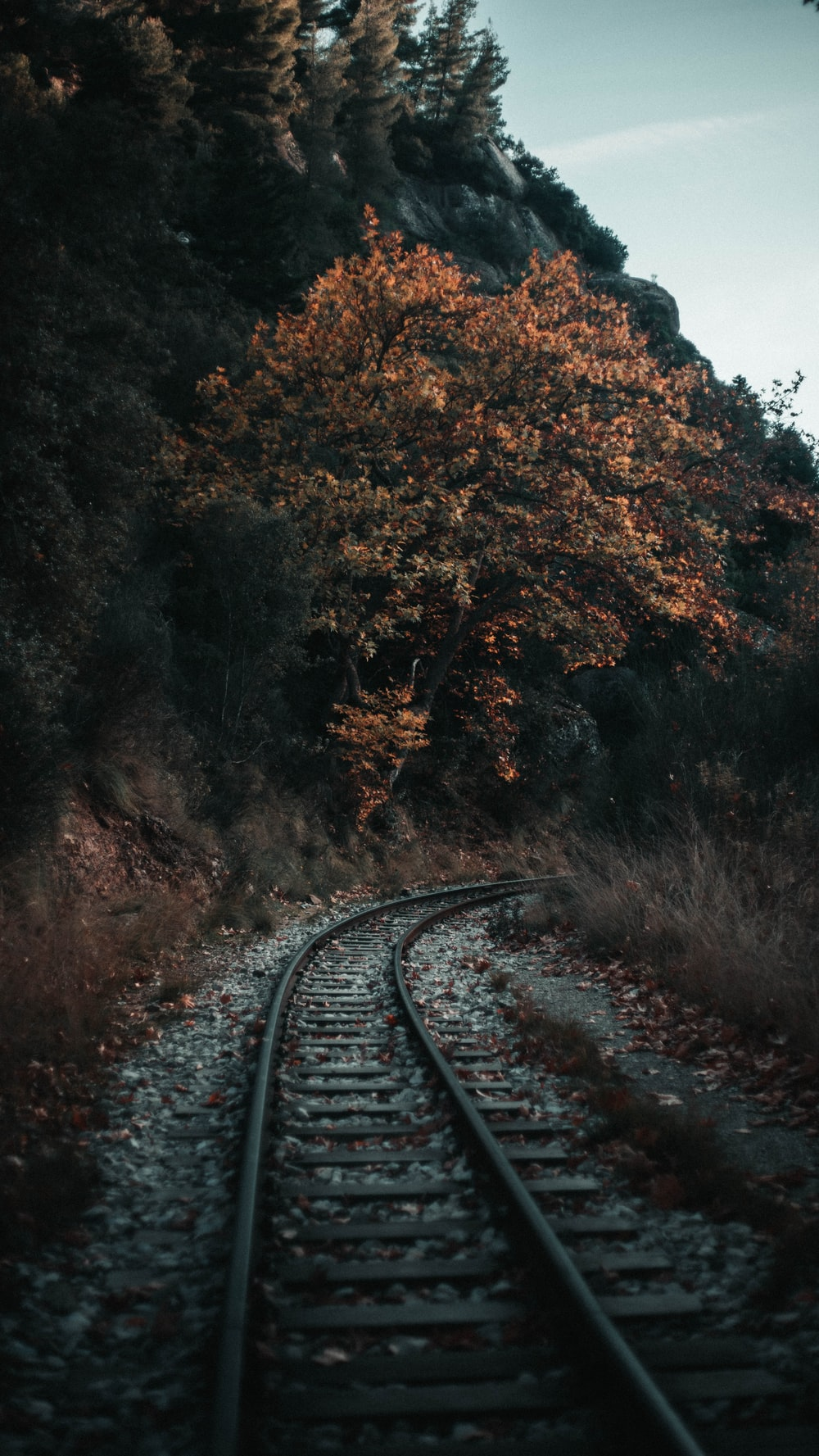 empty train track by tree and mountains