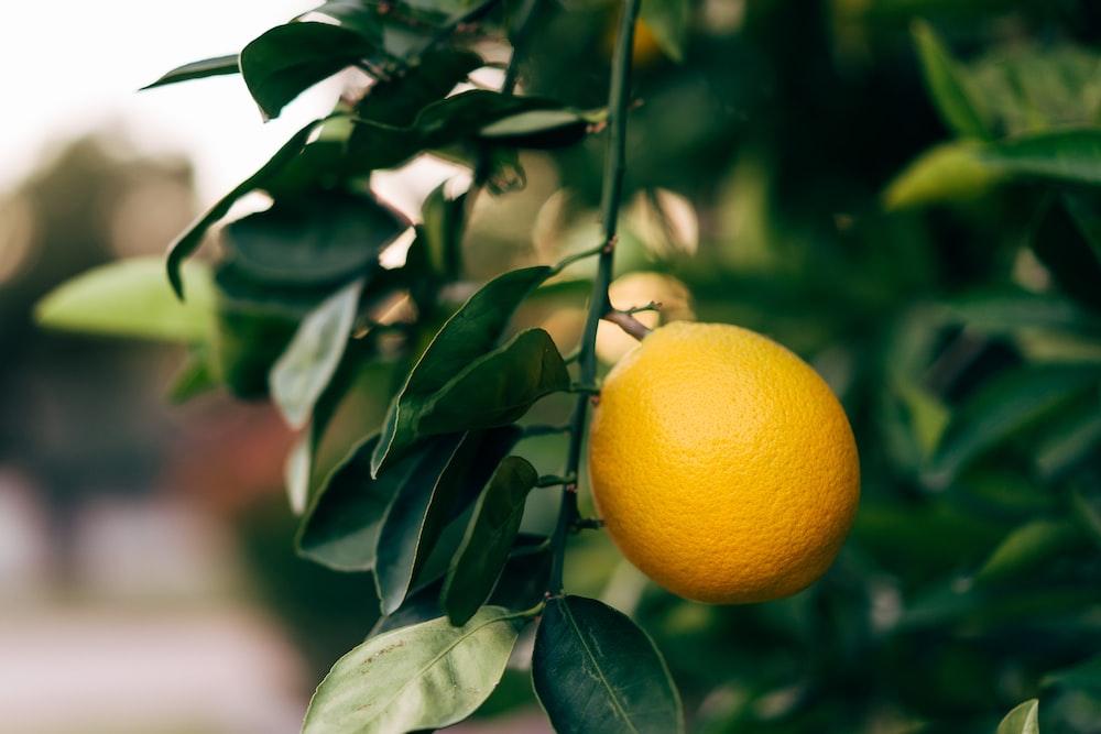 selective focus photography of orange fruit