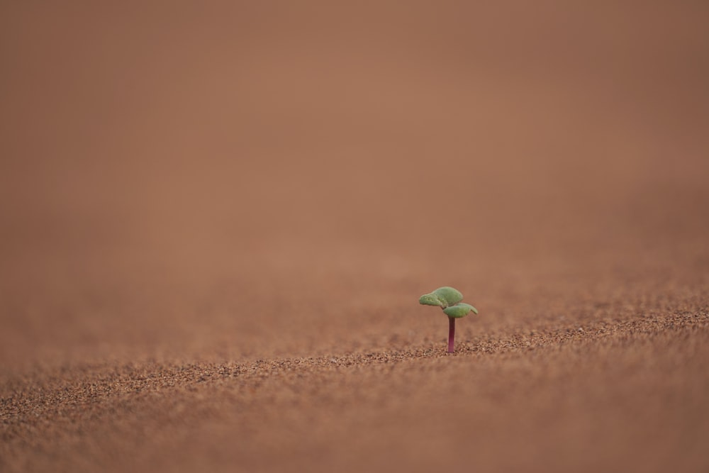 green sprout planted on soil