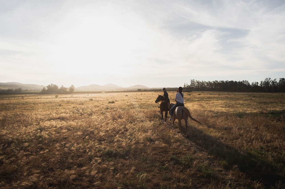 two person riding horse in open field during daytime