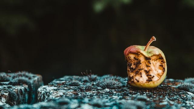 rotten green apple