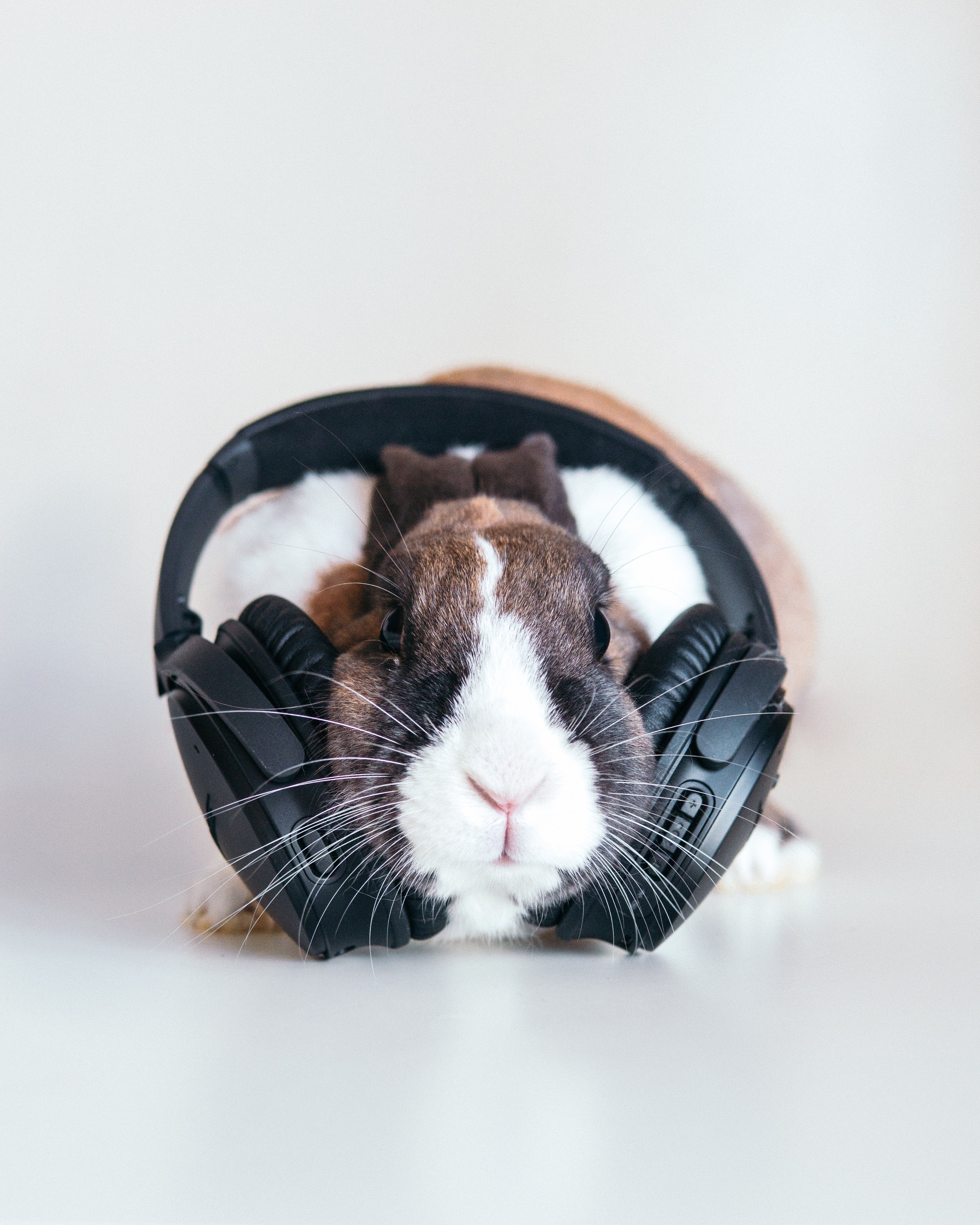 brown and white rabbit with black headphones