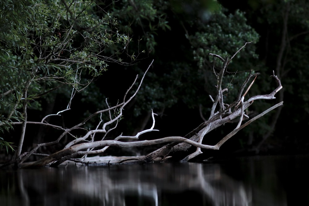 leafless tree in body of water during daytime