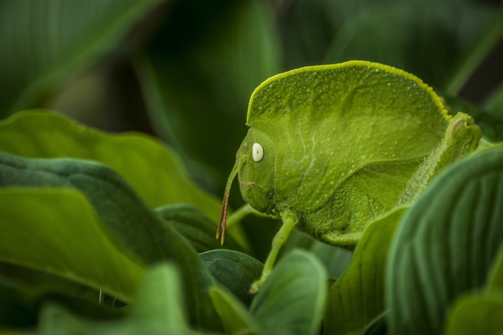small green insect on leaves