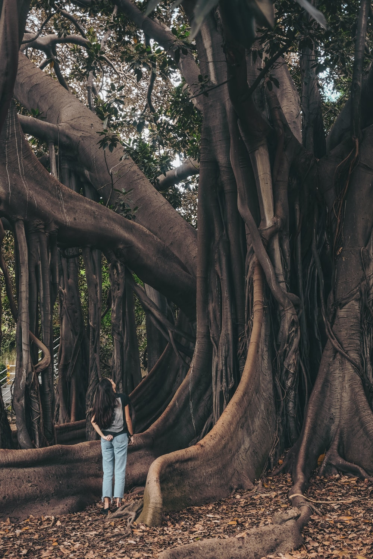 standing woman watching tree during daytime