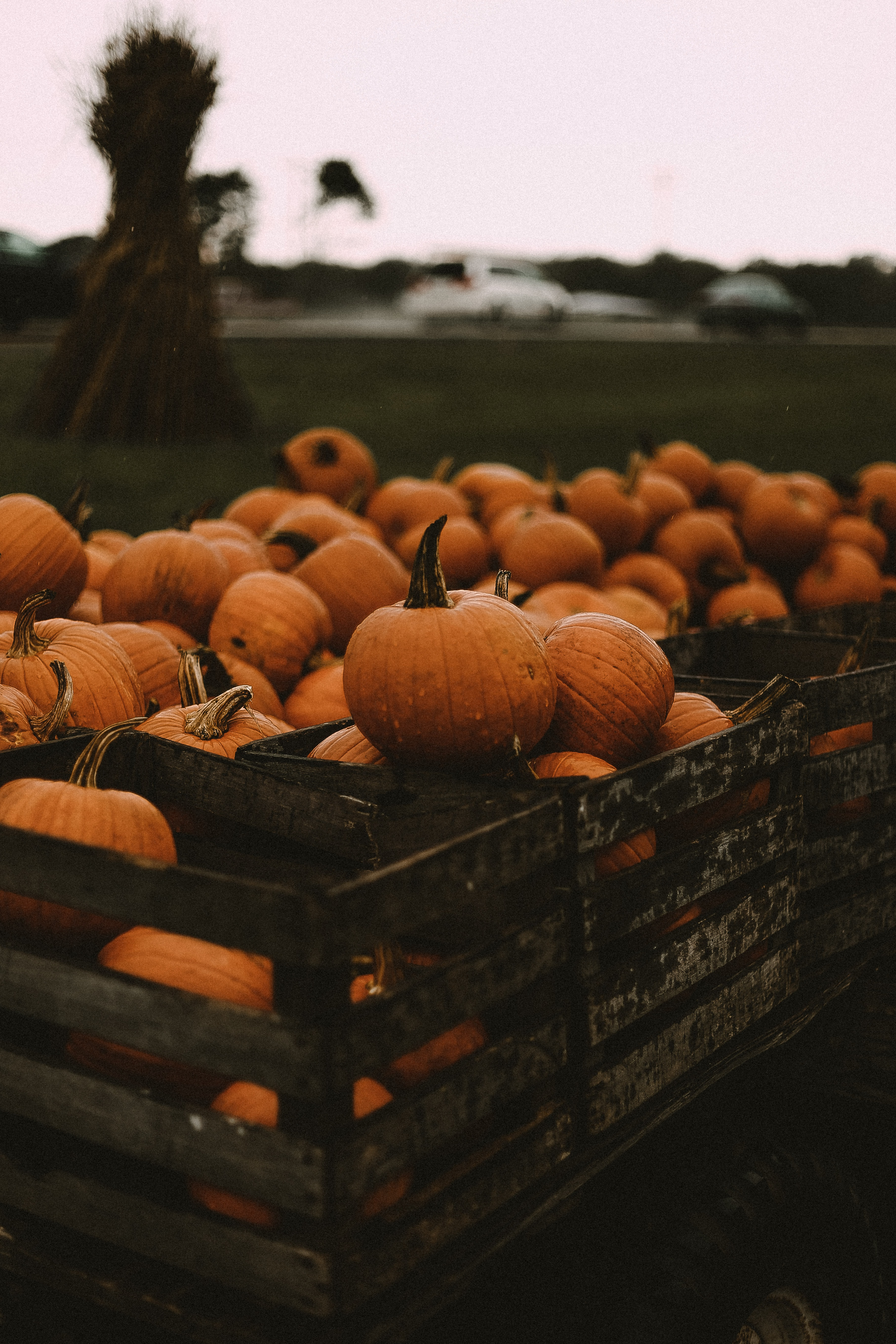 selective focus photography of baskets of pumpkins