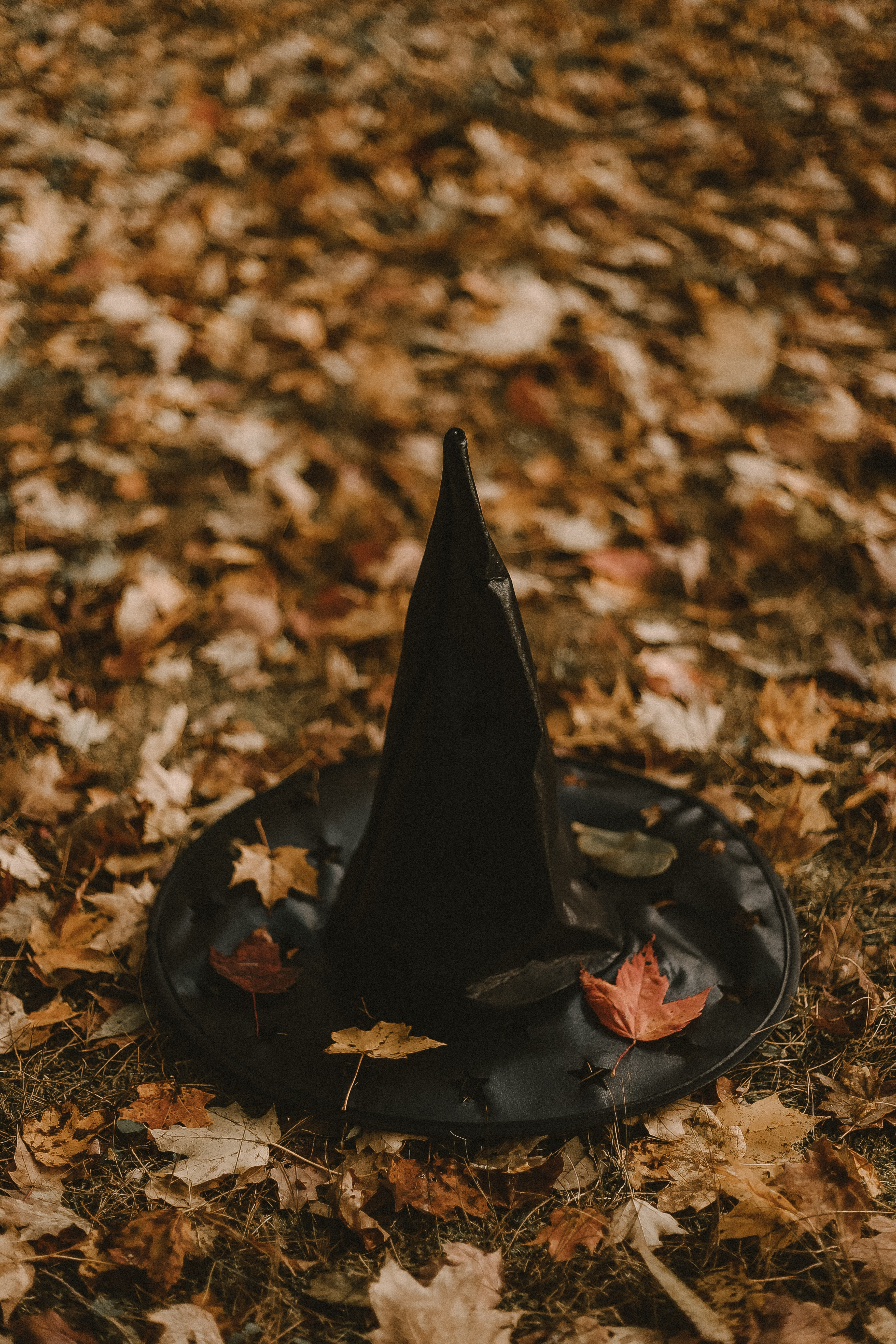 black witch hat on maple leaves