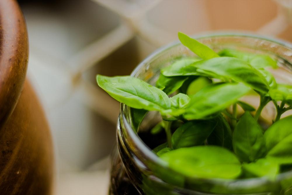 green herbs in clear glass jar