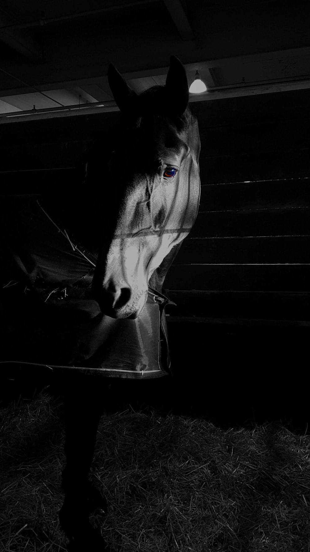 grayscale photography of horse inside barn