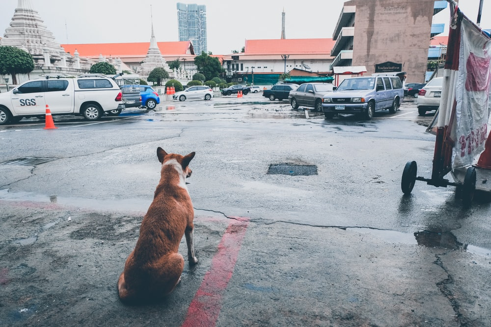 brown dog sitting and facing vehicles during daytime
