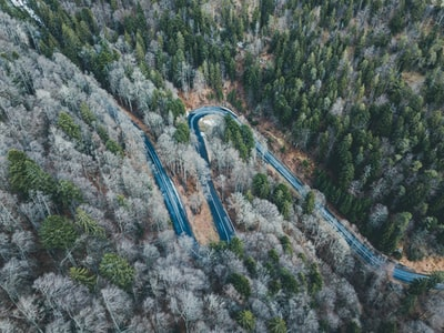aerial photography of curve road surrounded with trees