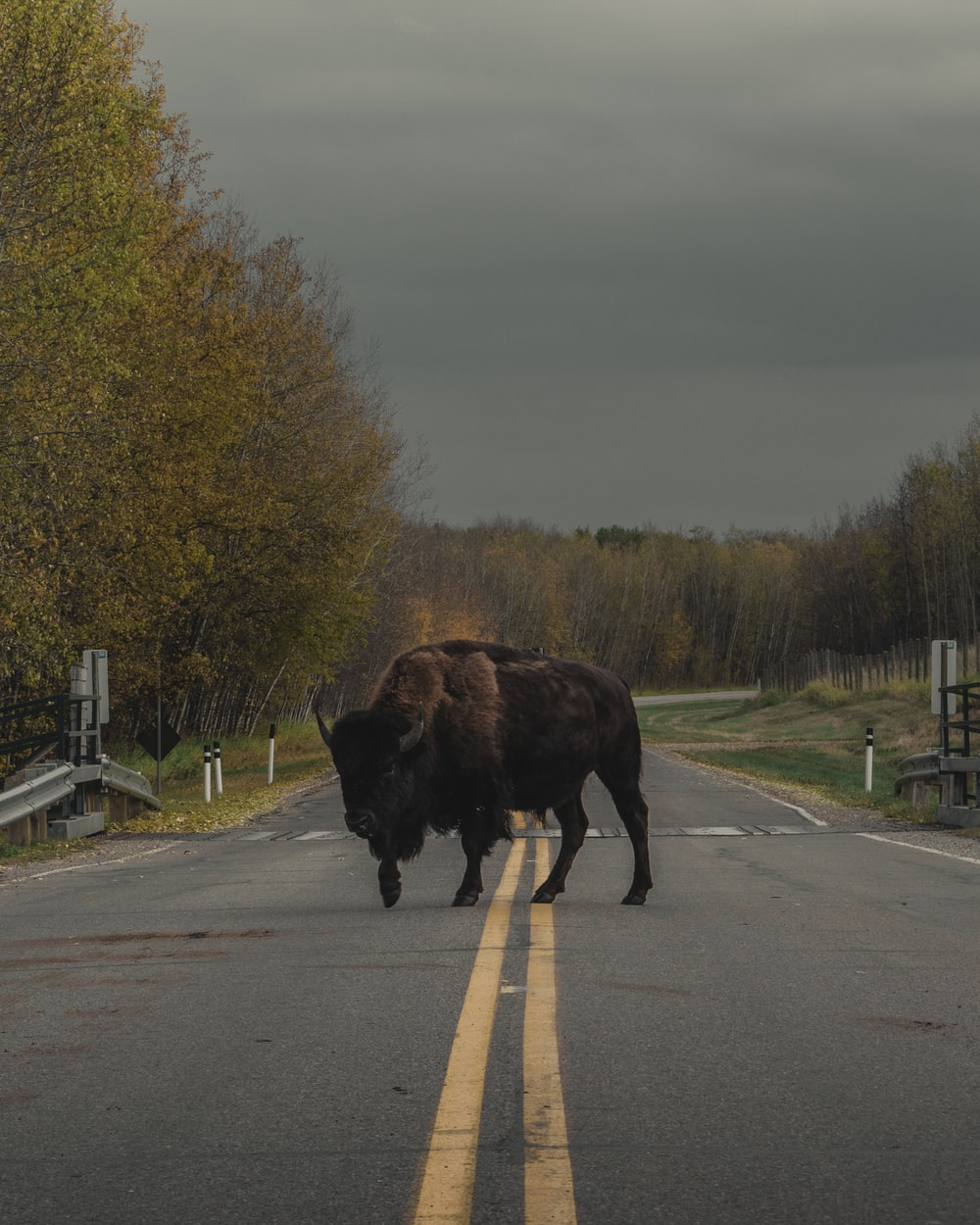 brown animal on road