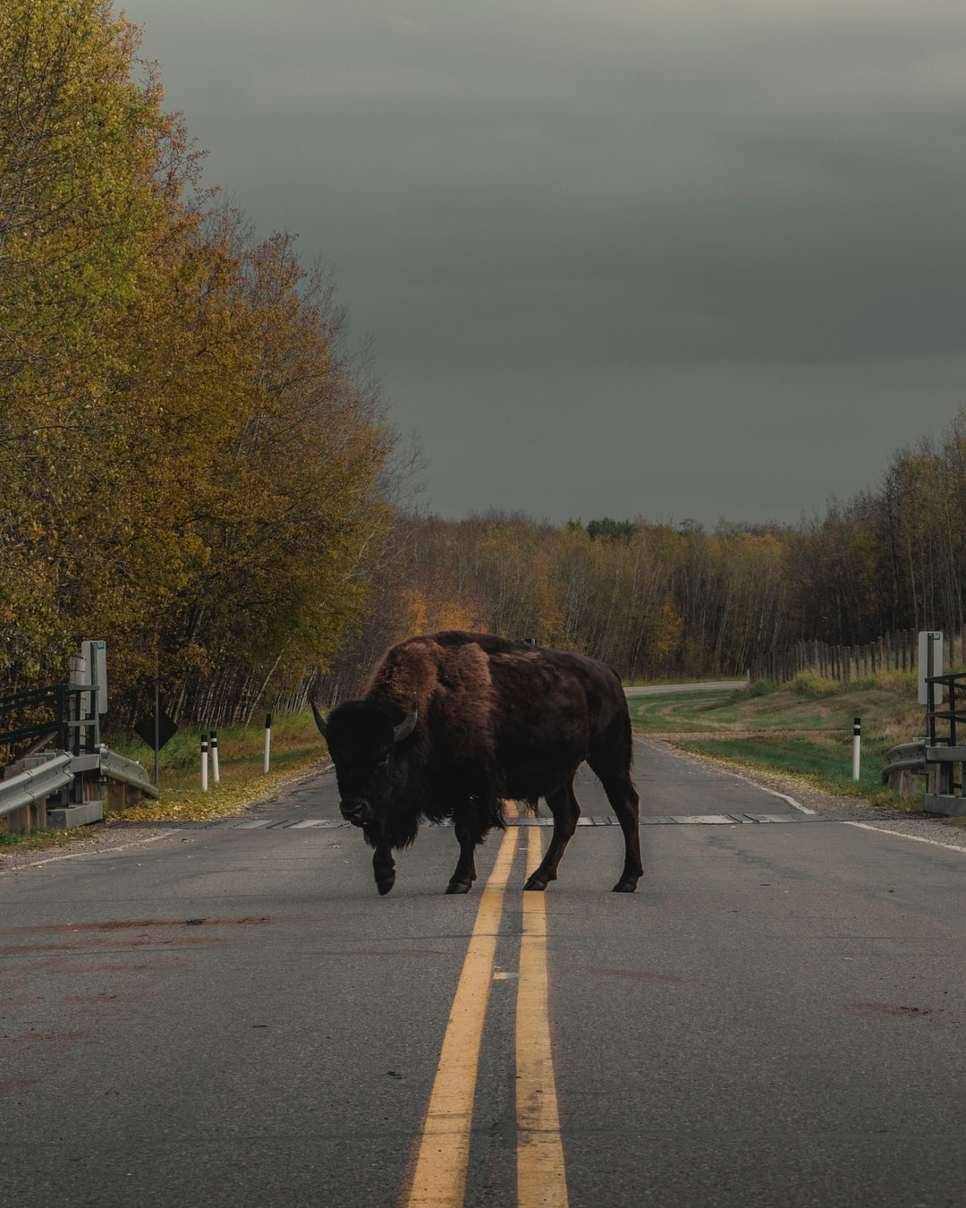 A funny thing you can have the chance to experience at the Elk Island National Park.