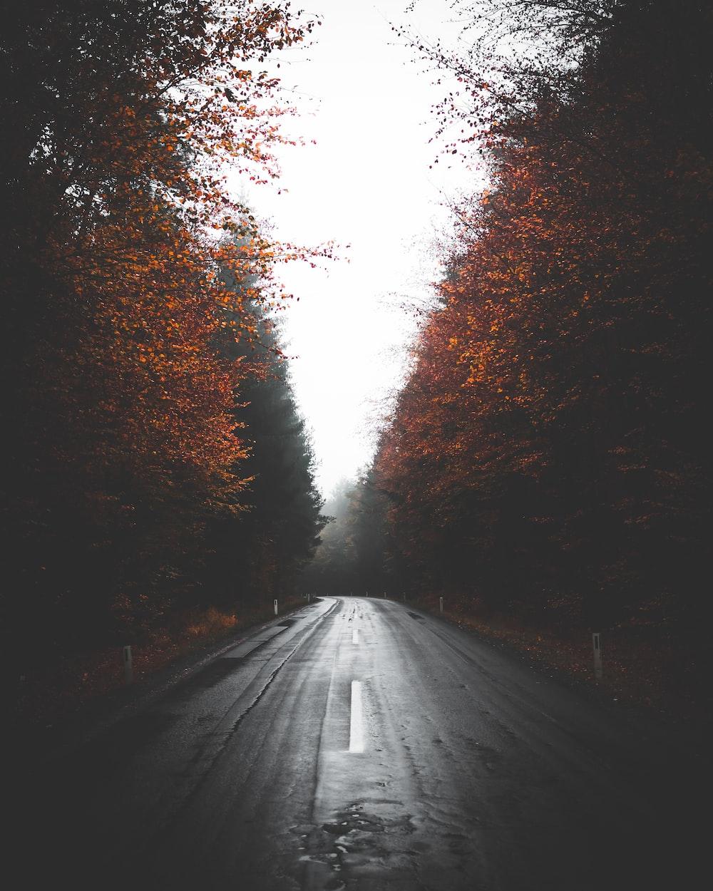 empty wet road between trees
