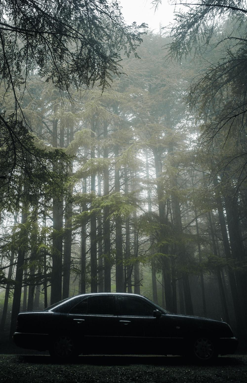 black sedan beside trees