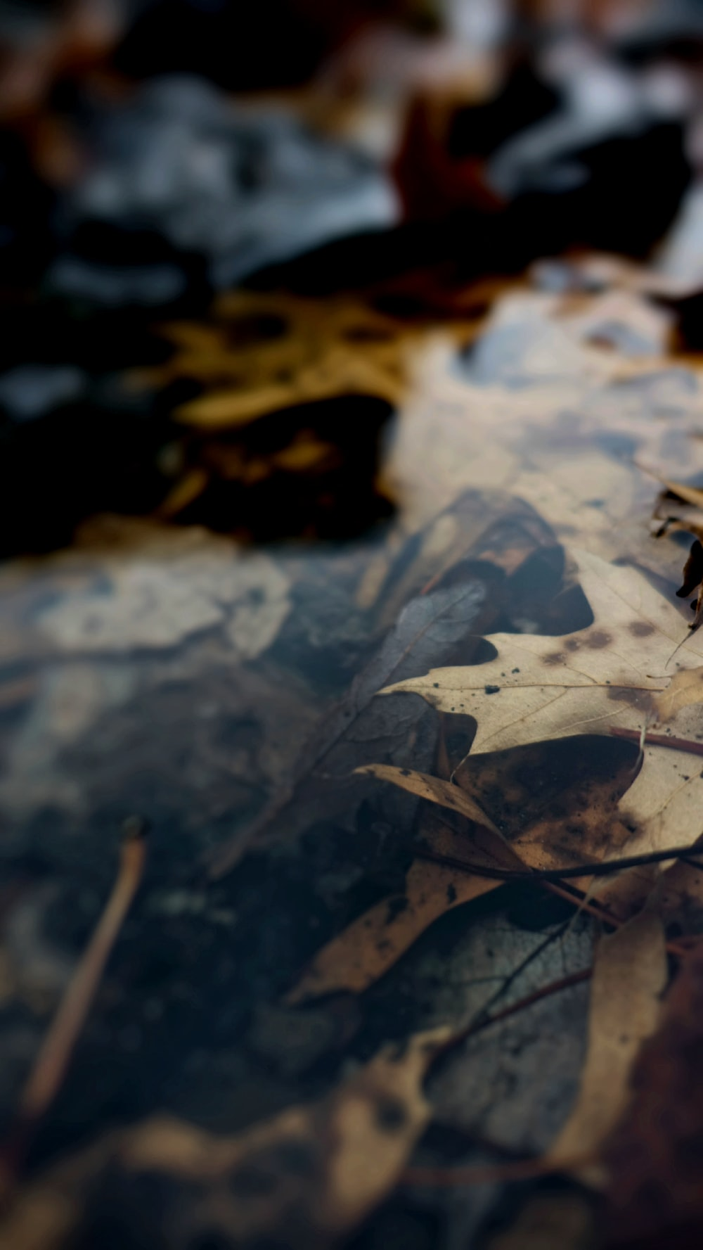 brown leaves on water close-up photography