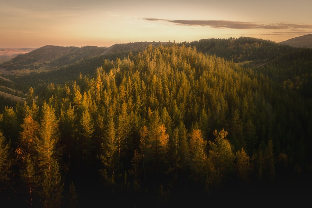 forest and mountains at the distance during golden hour