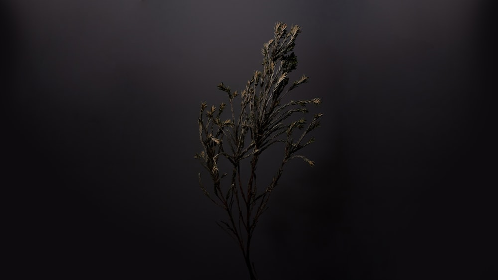 selective focus photo of leafless plant