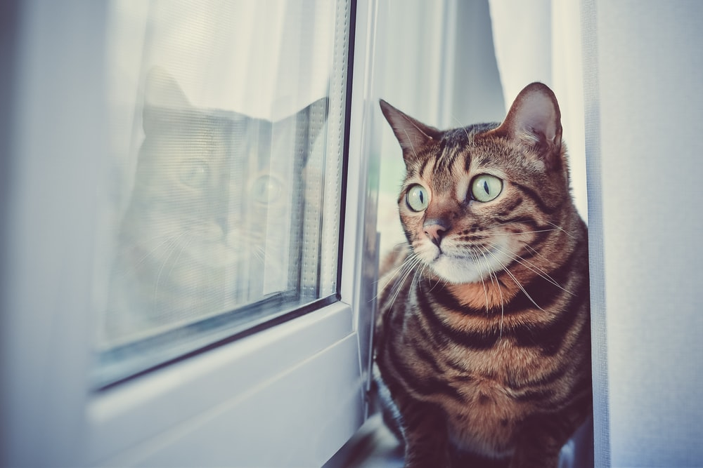 brown tabby cat beside glass window
