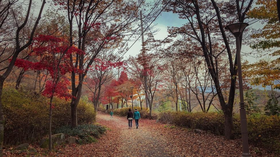 Trois personnes, au lieu d'un seul individu, marchent dans une nature luxuriante bien qu'en contexte urbain, contrastant avec l'image d'introduction de l'article