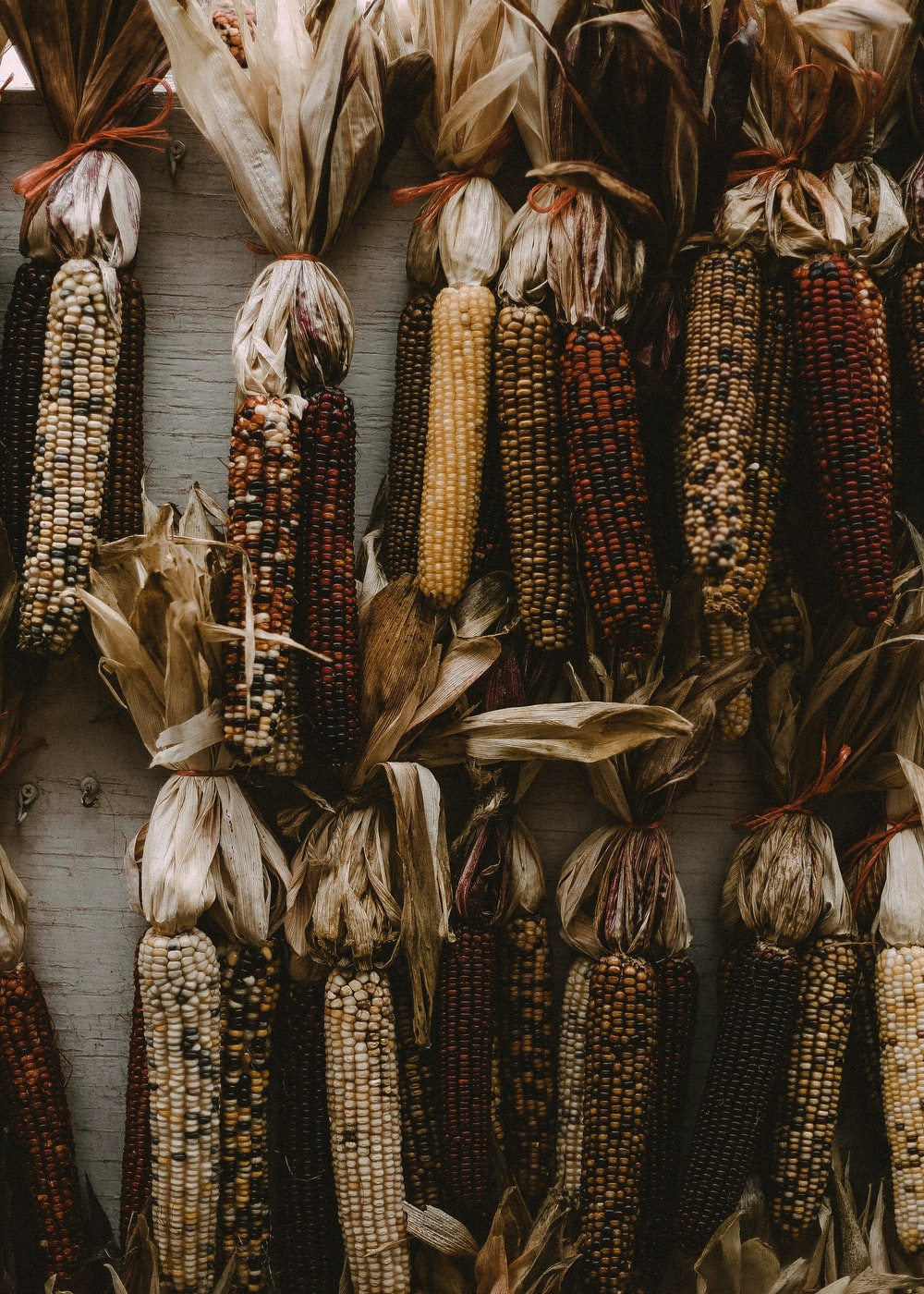 bunch of grilled corns