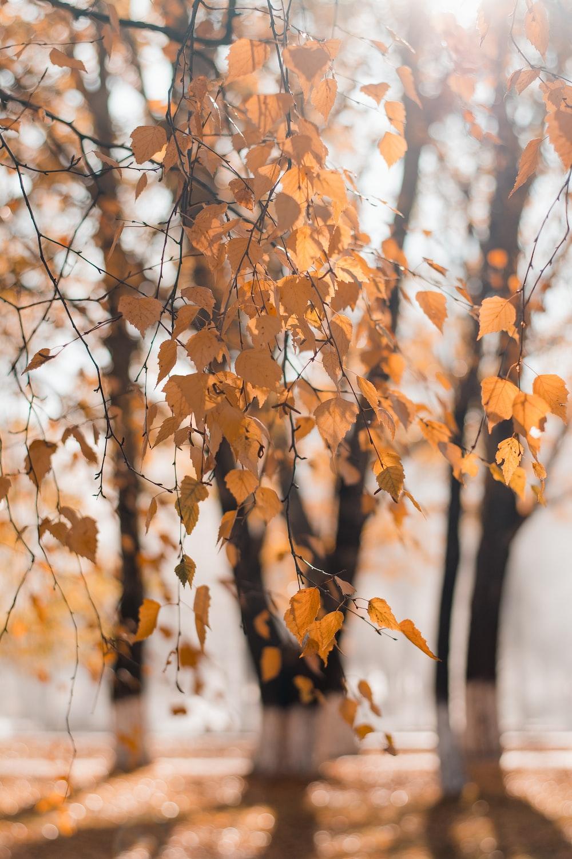 orange maple tree during daytime