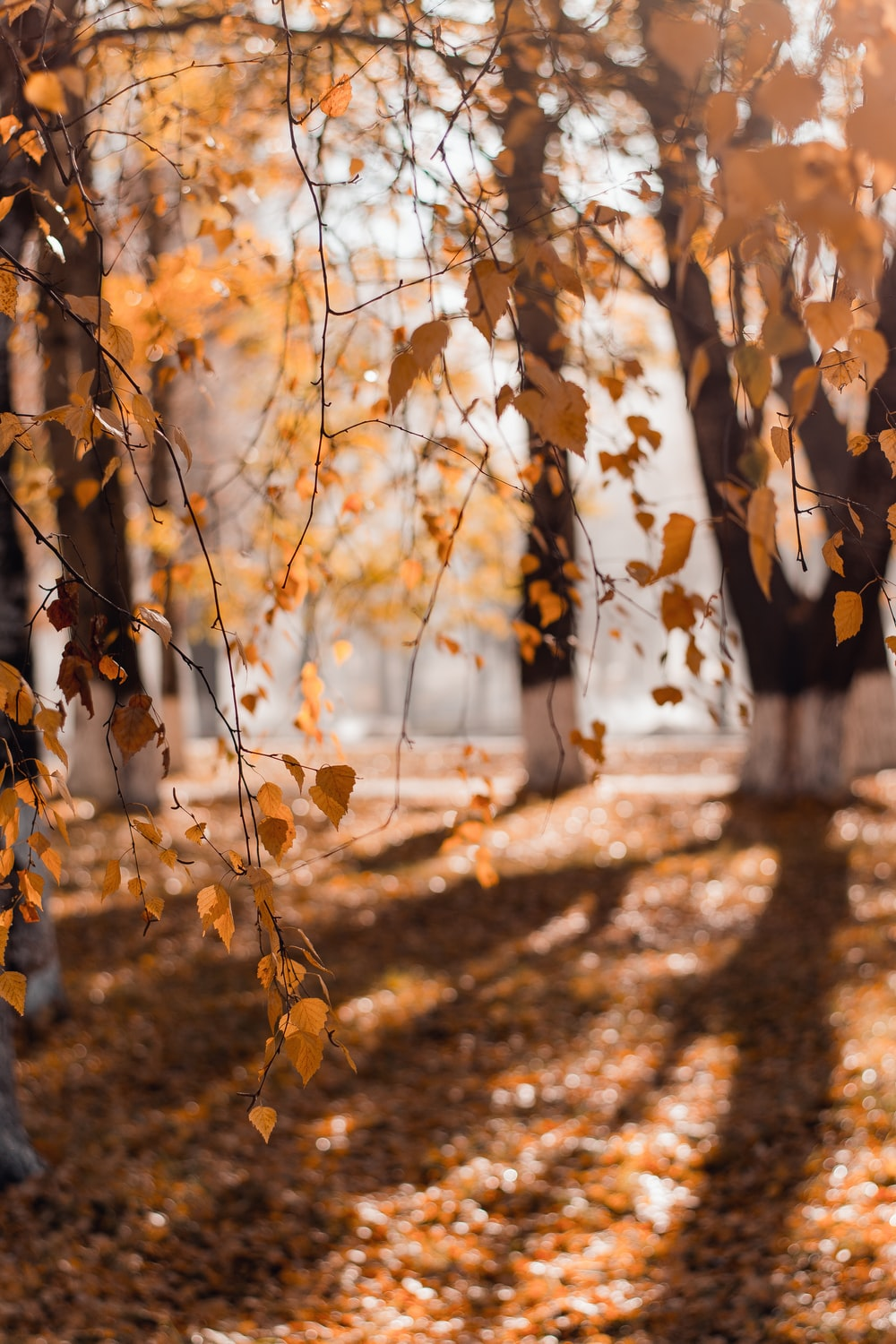selective focus photography of hanging yellow leaves from tree