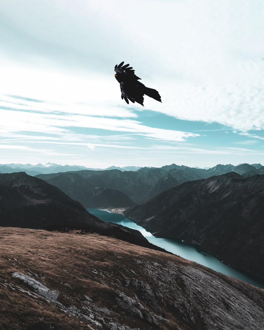 black bird in flight over mountains