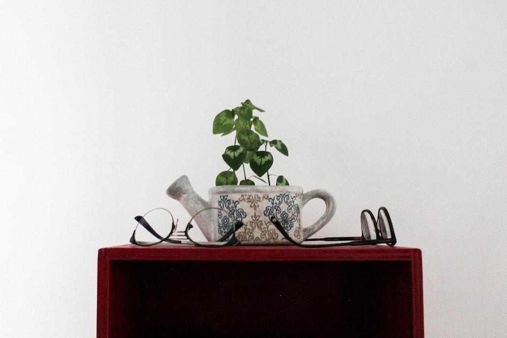 green-leafed plant in white ceramic pot