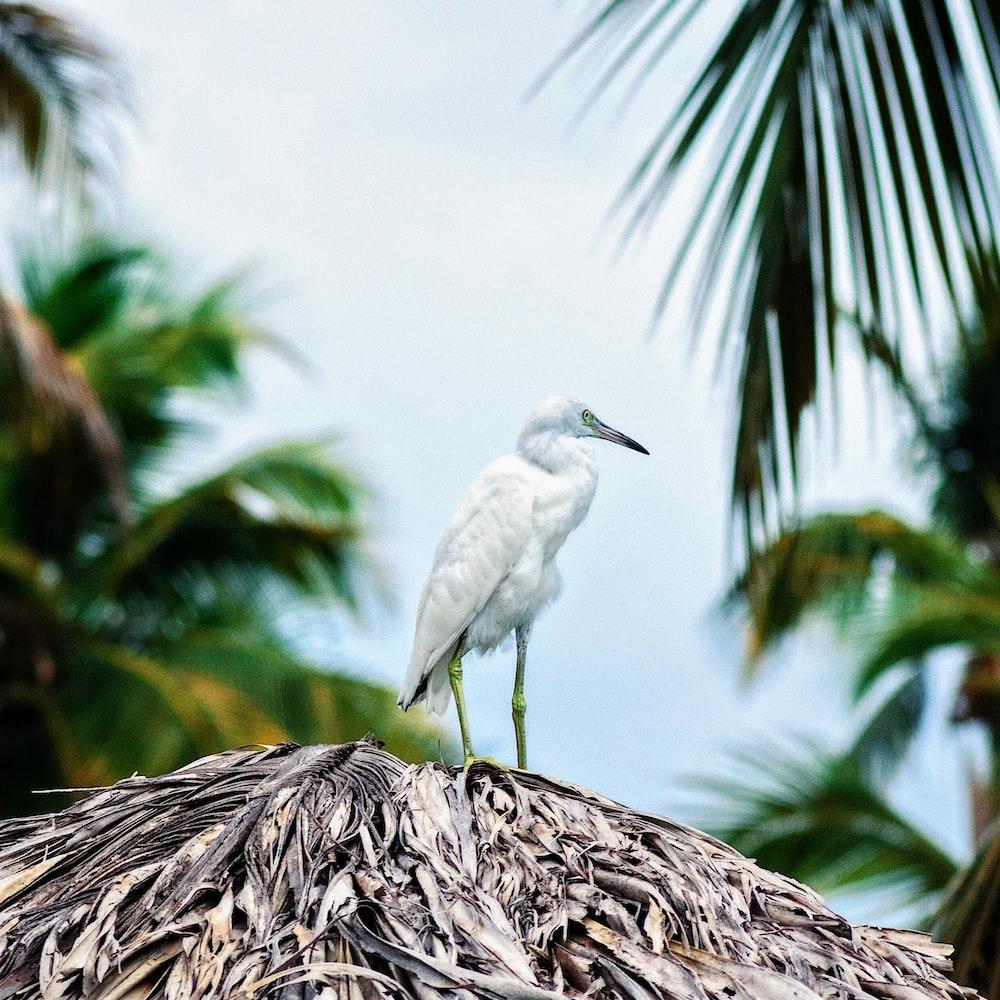 white bird on top of hut