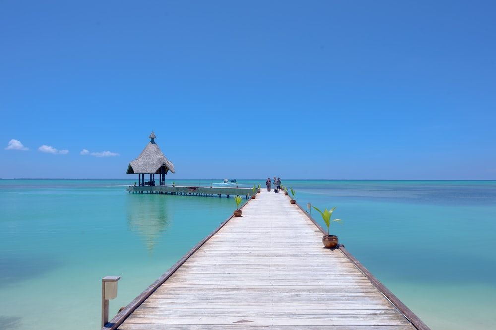brown wooden dock above calm body of water