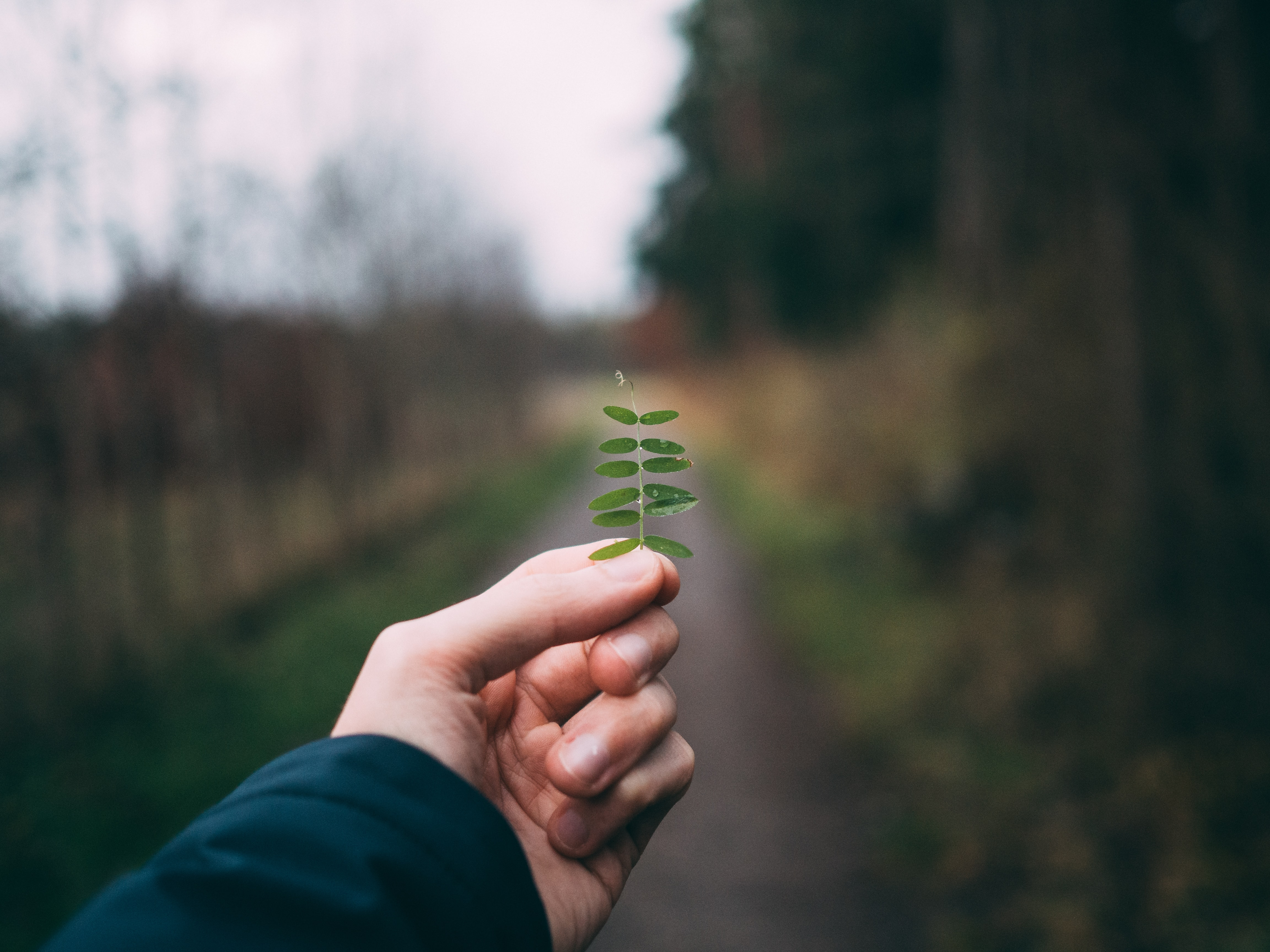 selective photography of person holding leaves