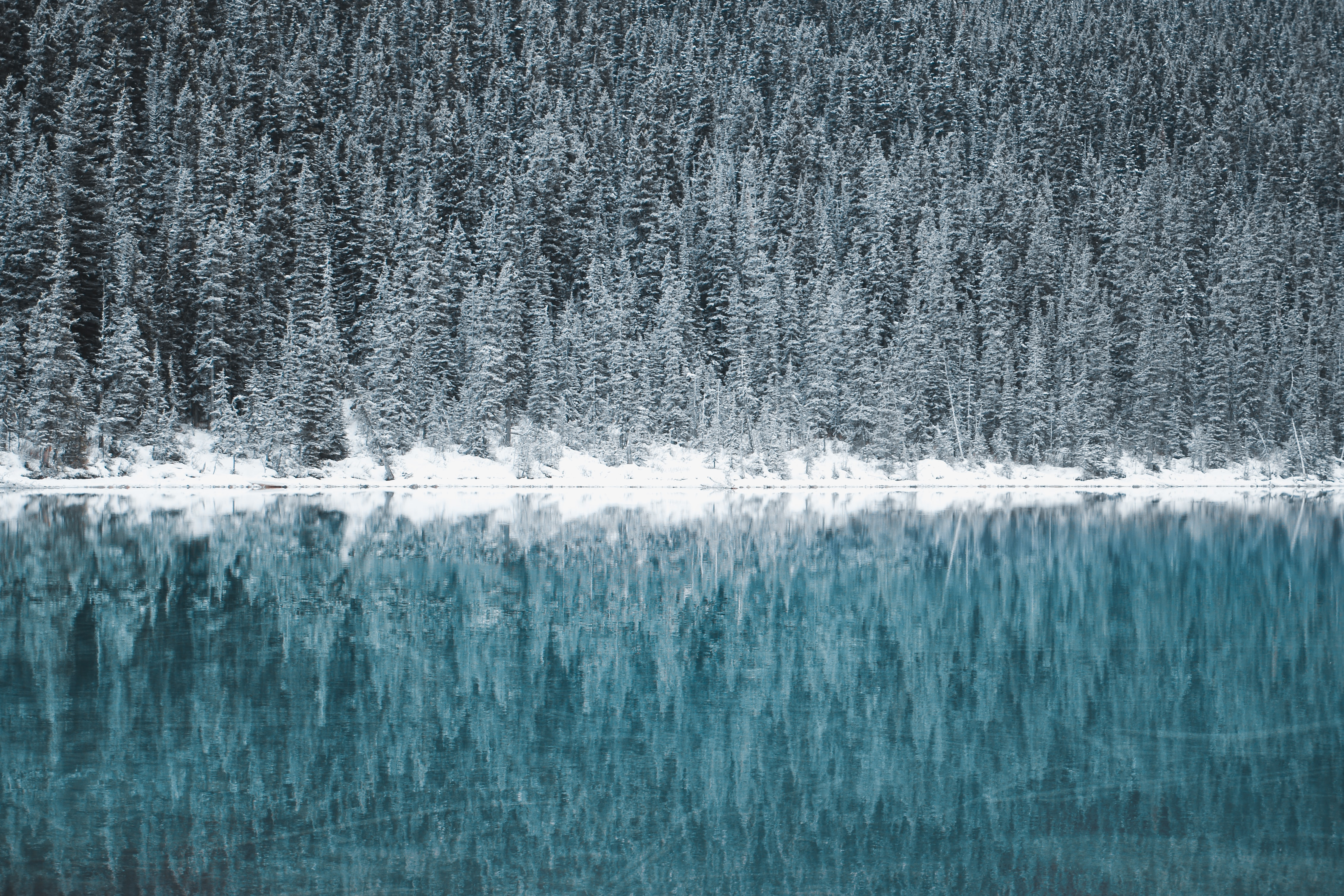 green leafed pine trees near river wallpaper
