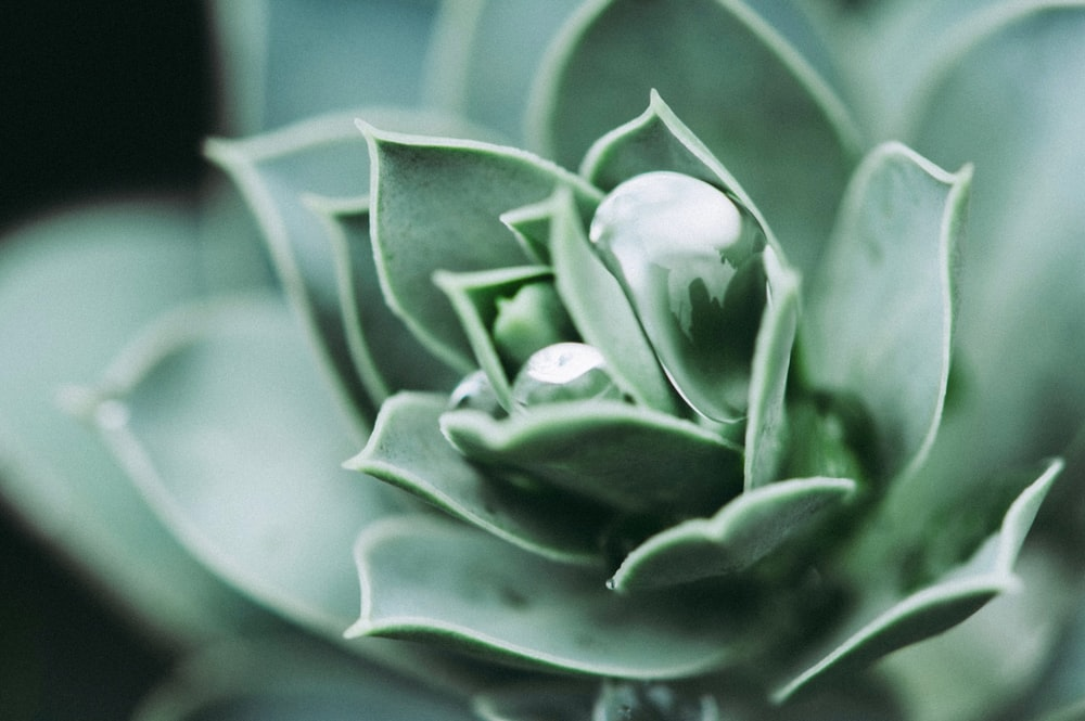 selective focus photography of green petaled flower