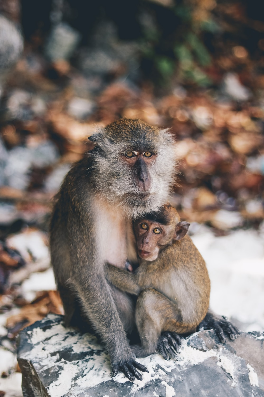 monkey and kid sitting on black rock