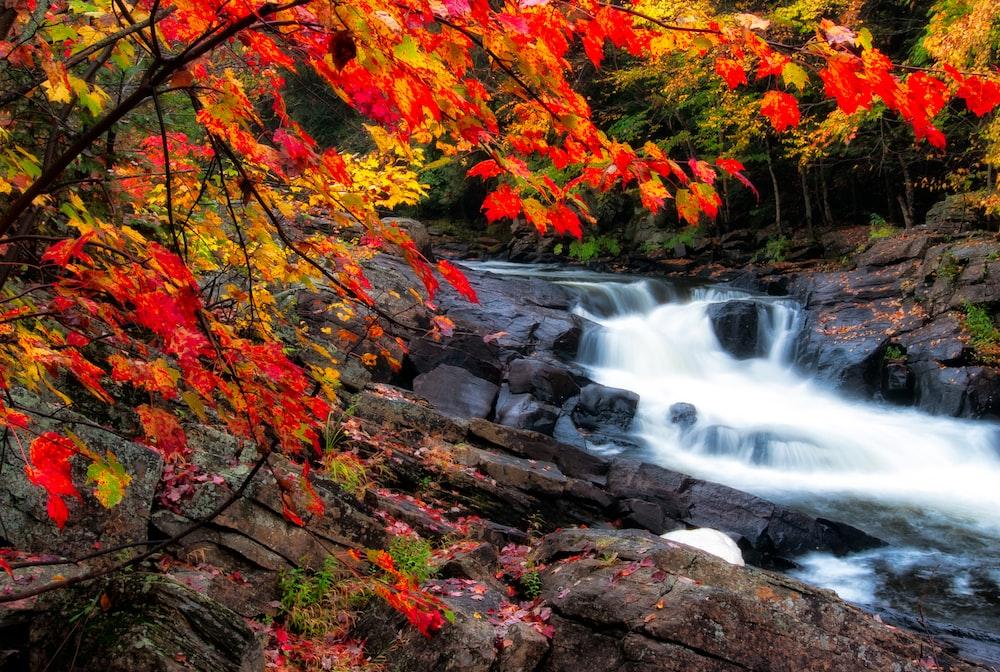 river waterfalls near trees