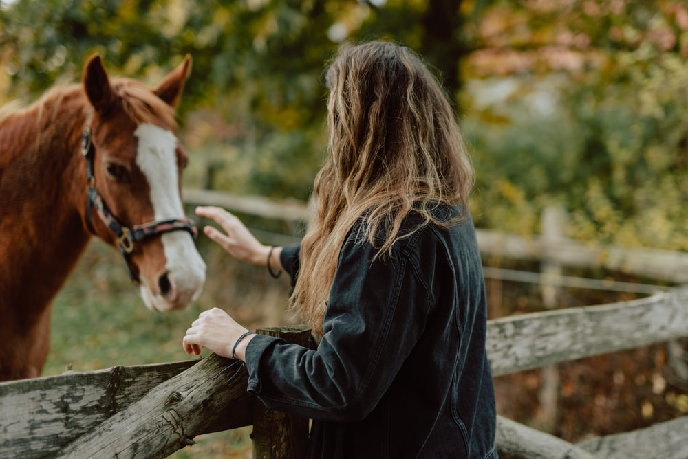 woman petting brown and white horse