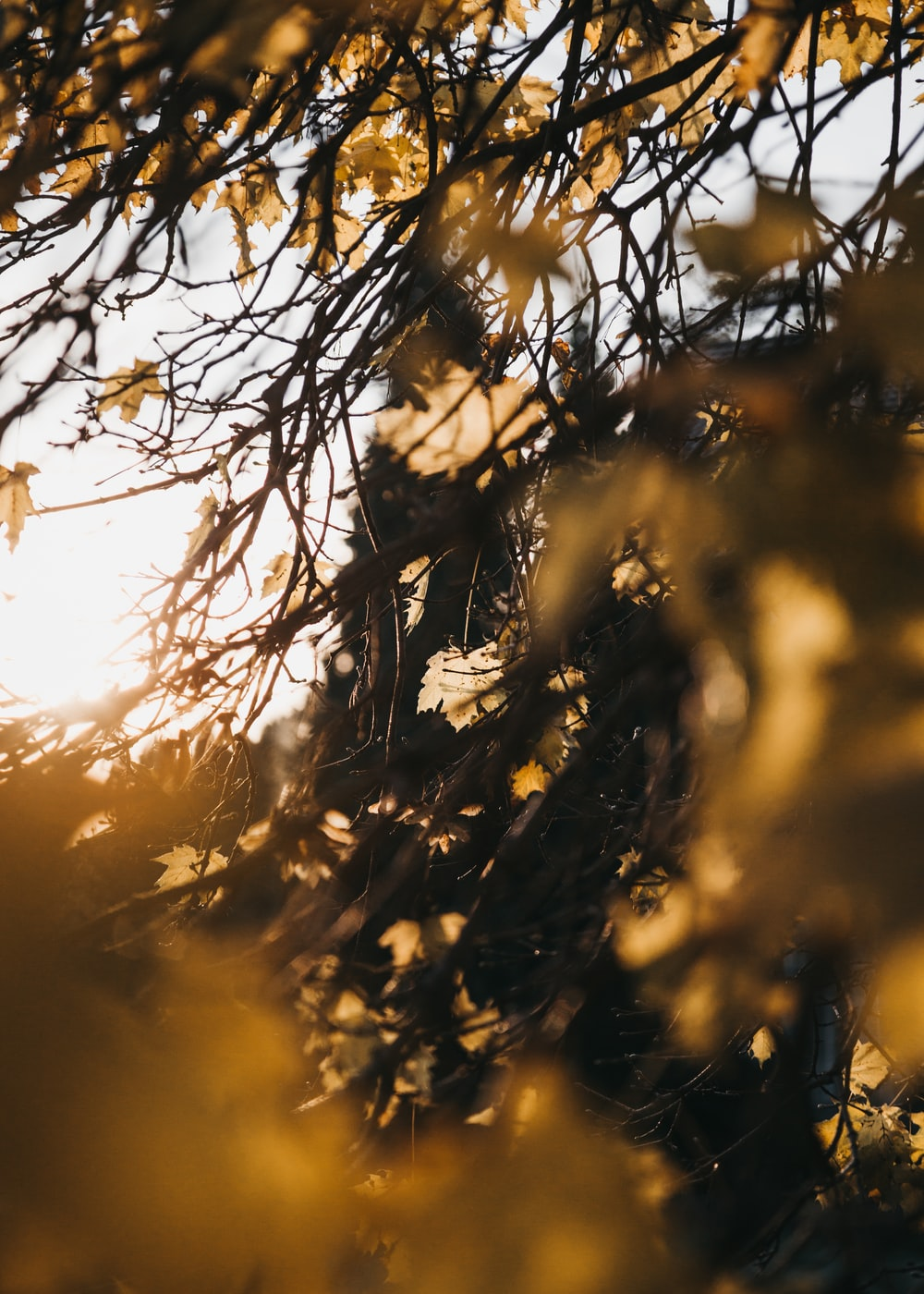 brown leaves under grey sky