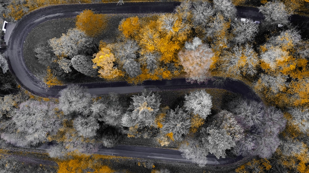 areal view photography of asphalt road and trees