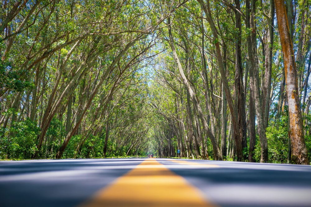 gray and yellow pavement road with trees