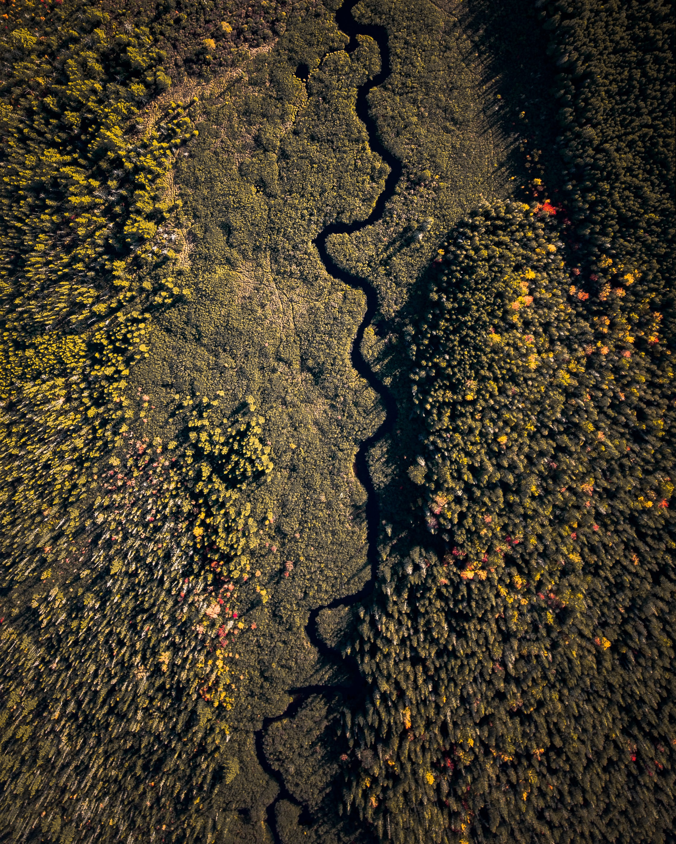 aerial photography green forest
